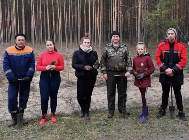 Свой вклад в формирование лесного богатства страны